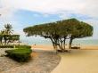 Árbol cúbico en Nha Trang