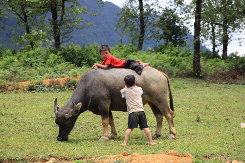 Niños jugando con los búfalos, alrededores de Sapa