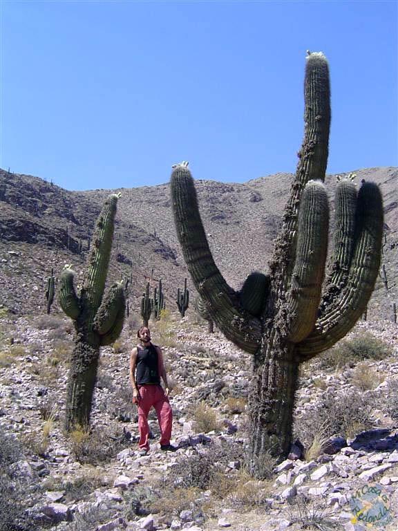 En el desierto, cerca de Salta