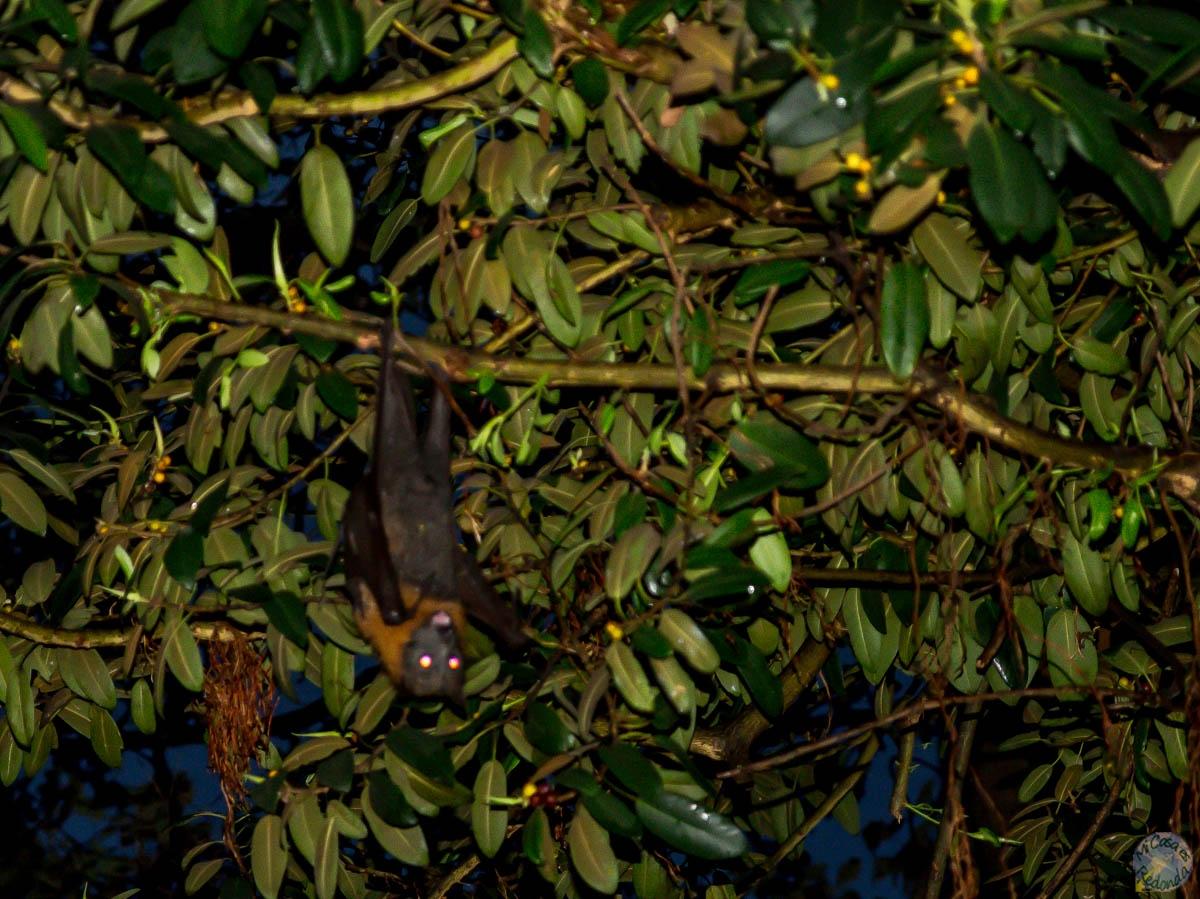 Murciélagos como bolsas de basura en Sydney