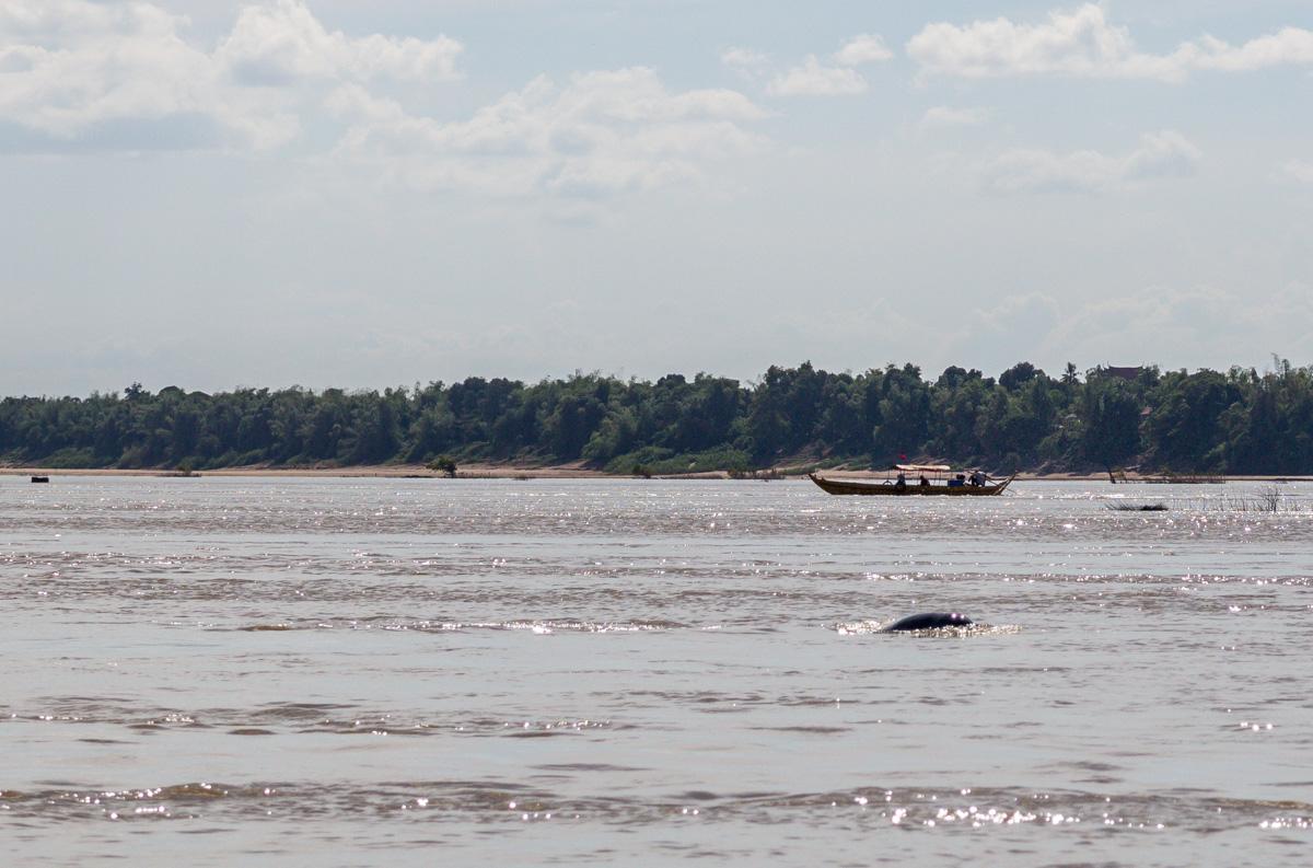 En el Mekong tras los delfines de Irawadi