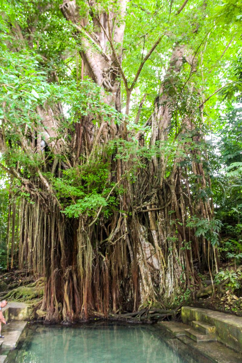 Banyan Tree con peces que  te hacen peeling