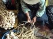 El señor de los ajos, día de mercado