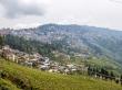 Darjeeling y los campos de té