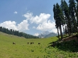 Kashmir!