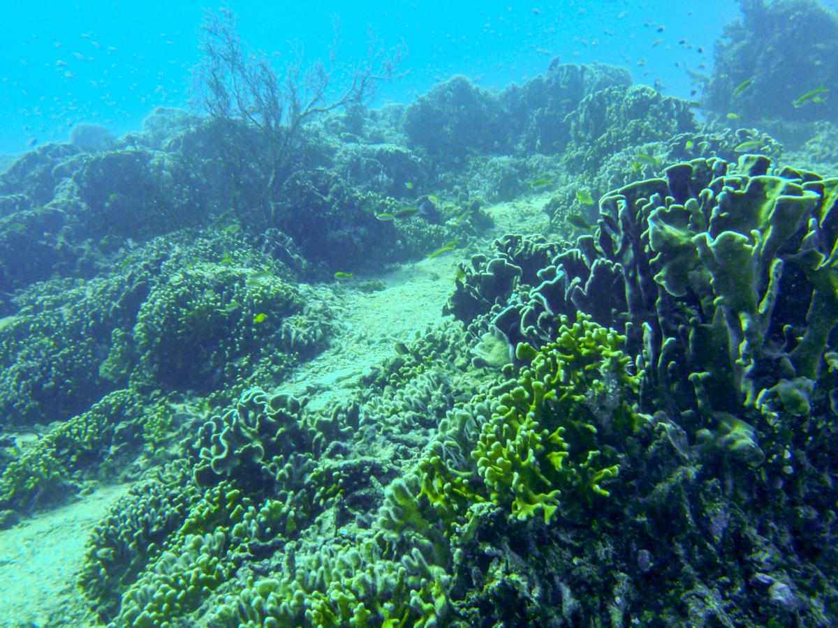 Los fondos de las Islas Gili