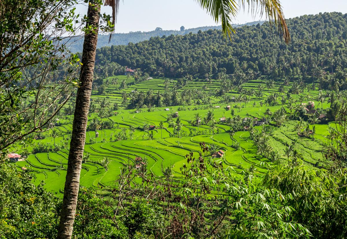 Terrazas arroceras en Bali