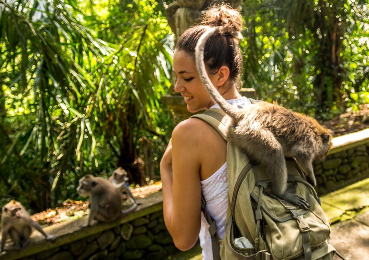Monos sin vergüenza, Ubud, Bali