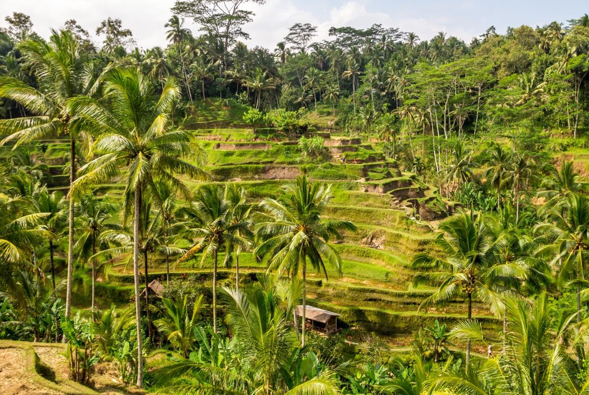 Terrazas arroceras cerca de Ubud, Bali