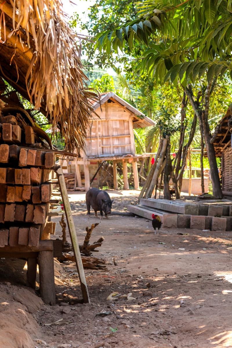 Casas y animales en el poblado de Sop Tood