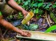 Recogiendo gusanos: nuestro aperitivo
