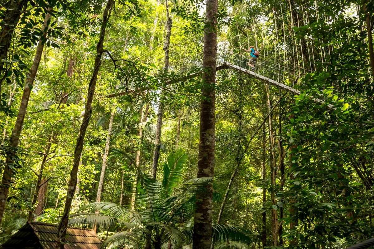 Pasarelas que suben y suben, canopy en Taman Negara