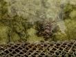 Lion Fish, Mabul
