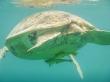 Culo de tortuga, Turtle Point