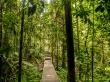Paseo por Taman Negara