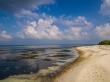Las algas en la marea baja, Kaashidhoo
