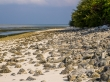 Cementerio de coral, Kaashidhoo