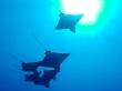 Escuadrón de eagle rays, Maldivas