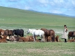 En la campiña mongola