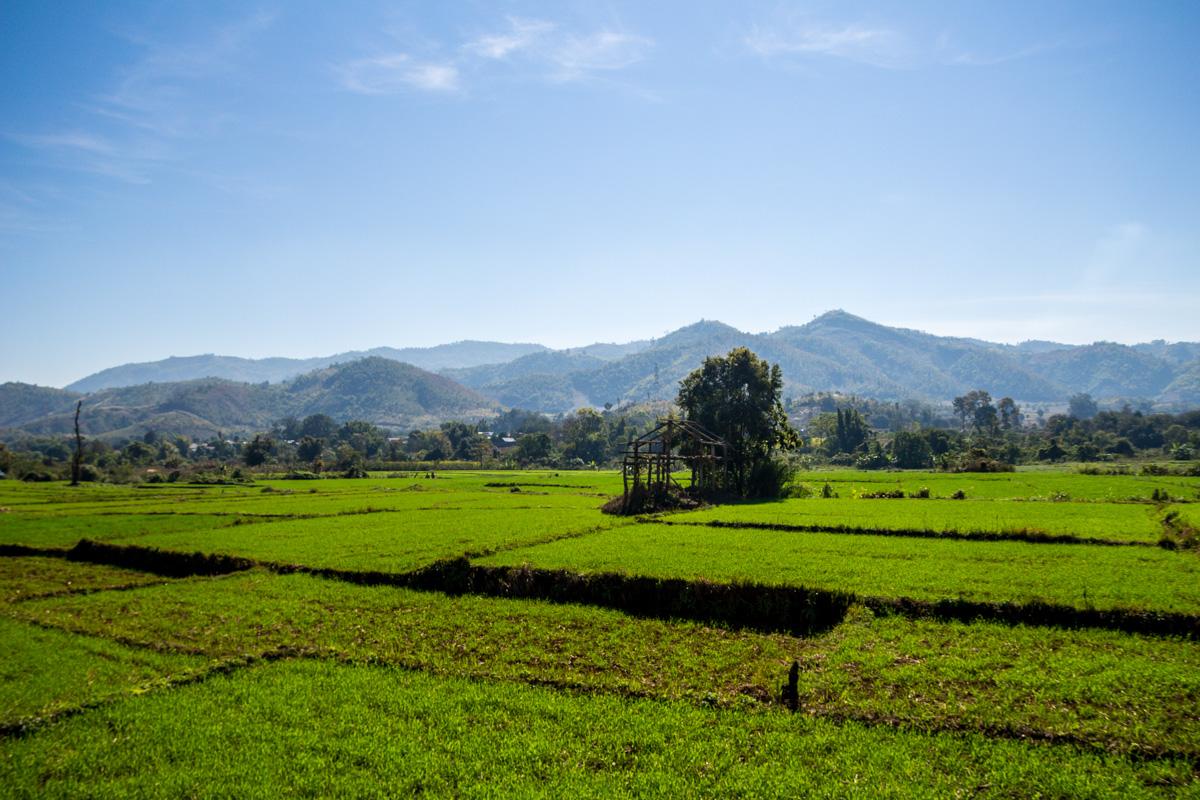 Verdes prados, tren de Hsipaw a  Mandalay