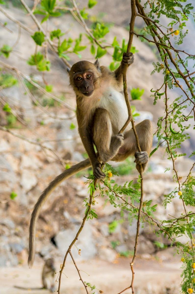 Monos en busca de comida