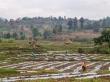 Trabajando el campo, sandías en los alrededores de Hsipaw