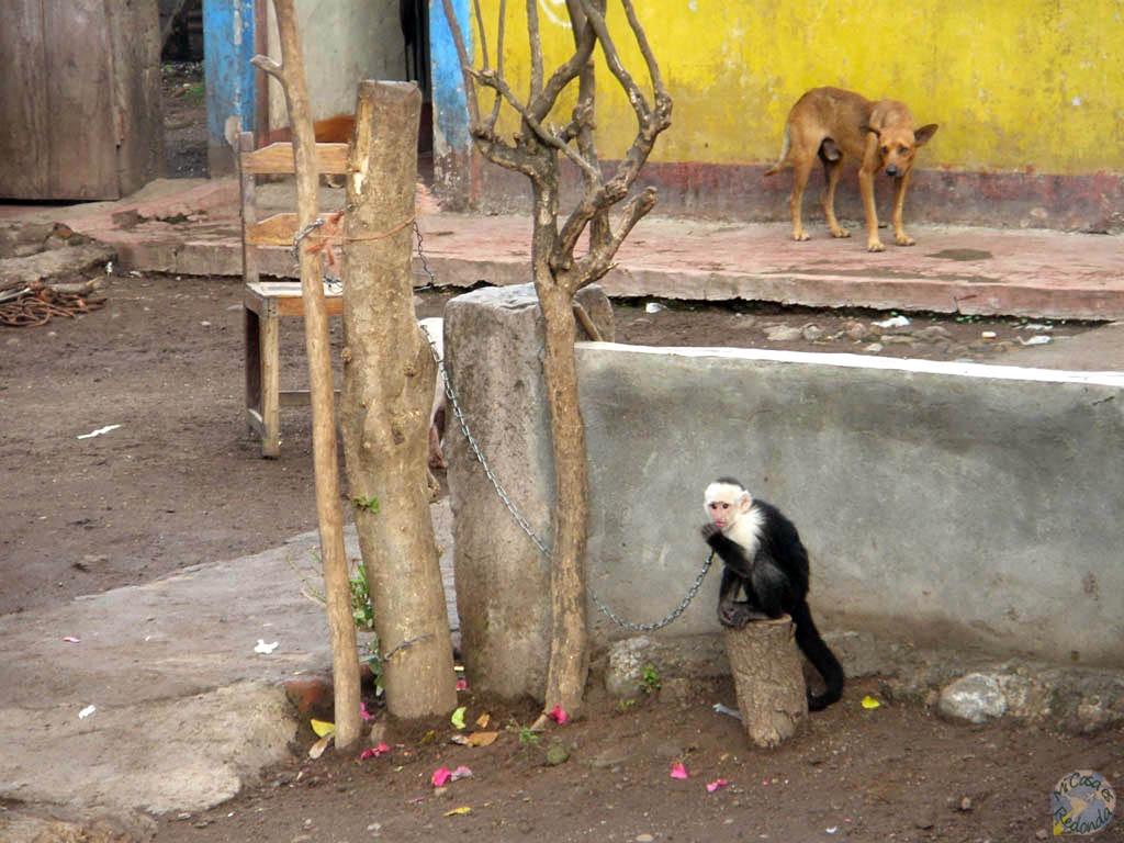 Pobre mono!