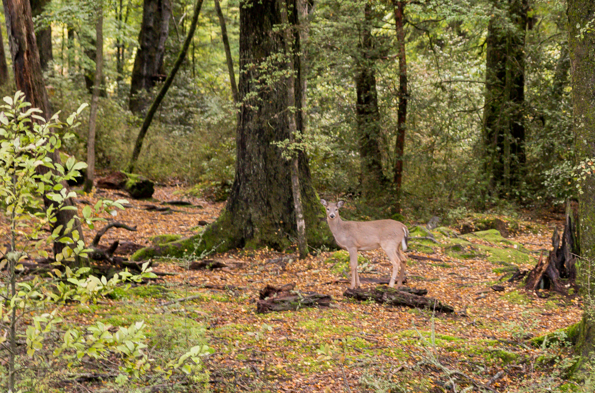 Bambi! Región de Queenstown