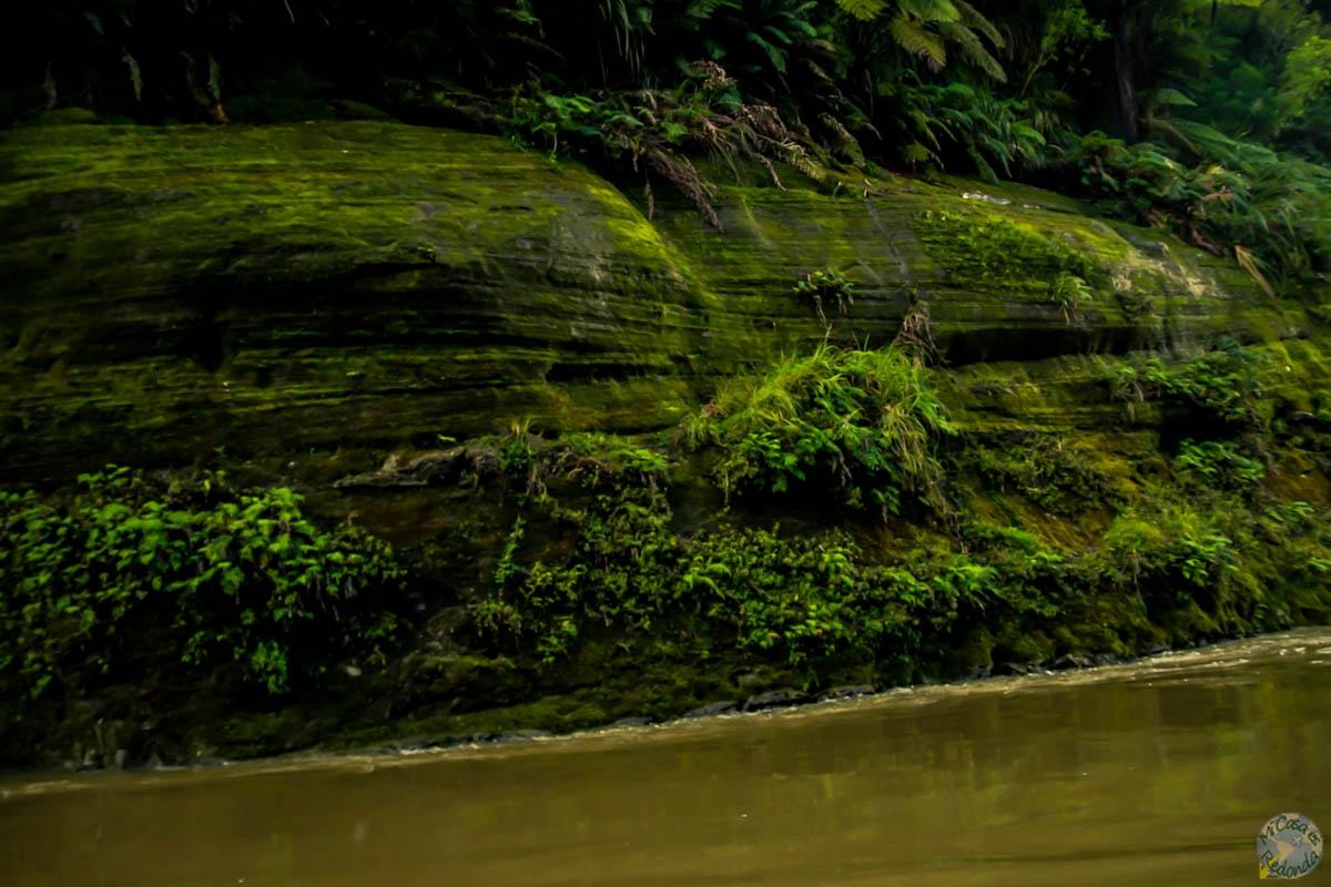 El verde por doquier, Whanganui Journey