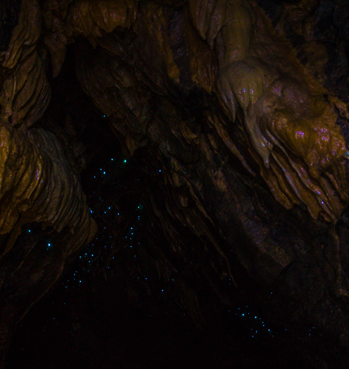 Glowworms! Abbey Caves, Northland