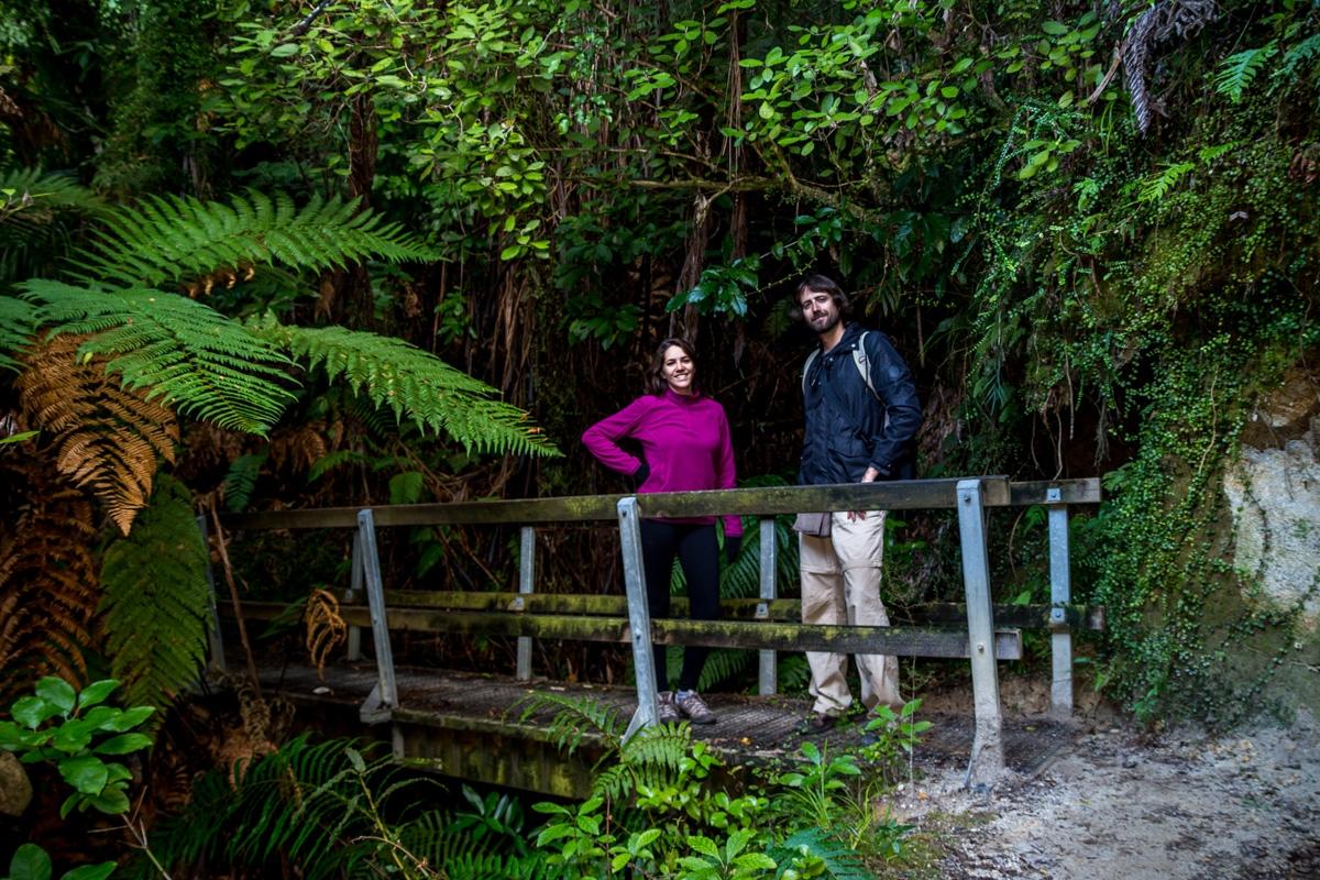 Entre la vegetación, Abel Tasman