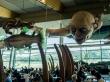 Gollum también come en el aeropuerto de Wellington