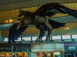 El jet privado de Gandalf, Aeropuerto de Wellington