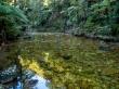 Ríos de agua transparente, Abel Tasman