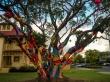 Árbol de colores, Rotorua