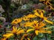 Detalles del Botanic Garden
