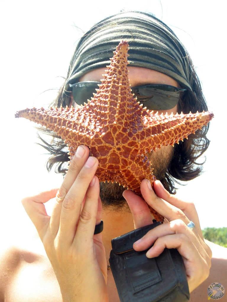 Estrellaca de mar