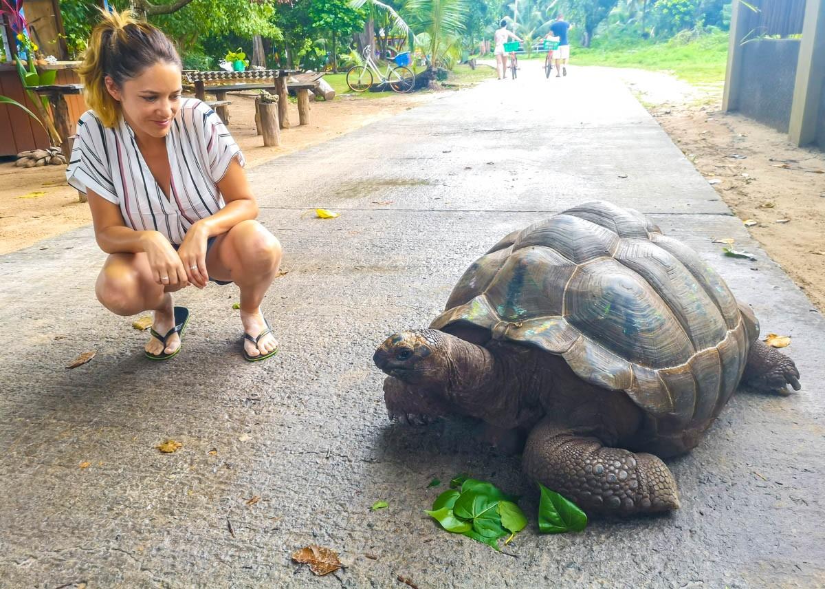 Tortuga en la carretera, Seychelles