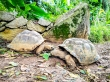 Tortugas de Aldabra, Seychelles