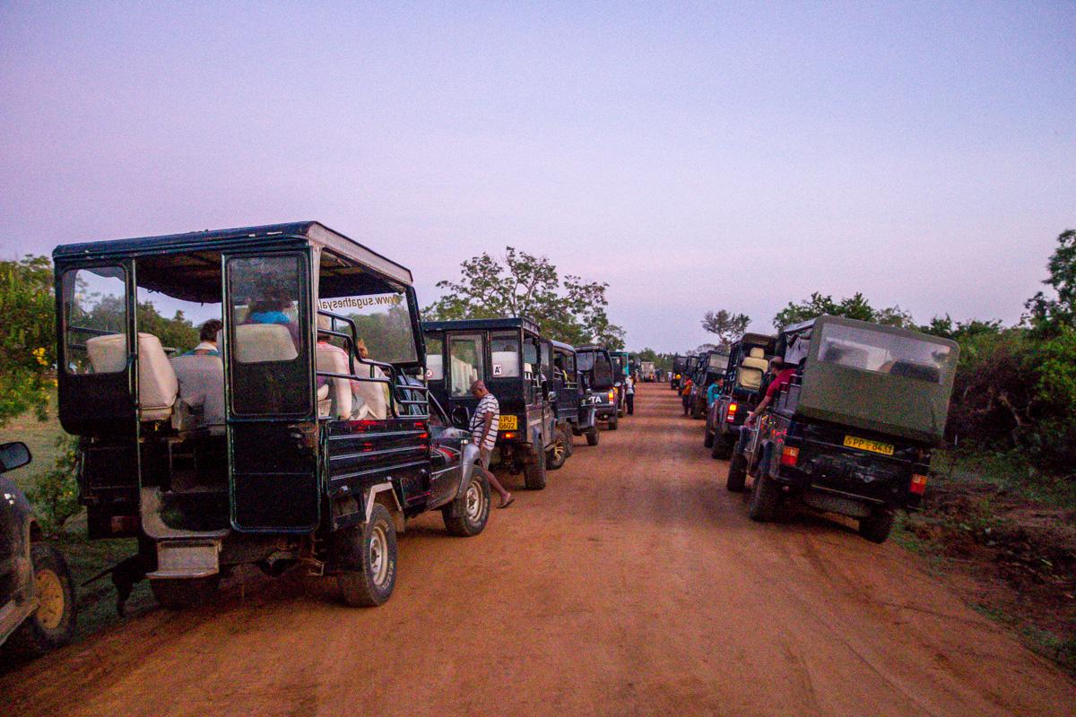 Atasco en el safari, Yala