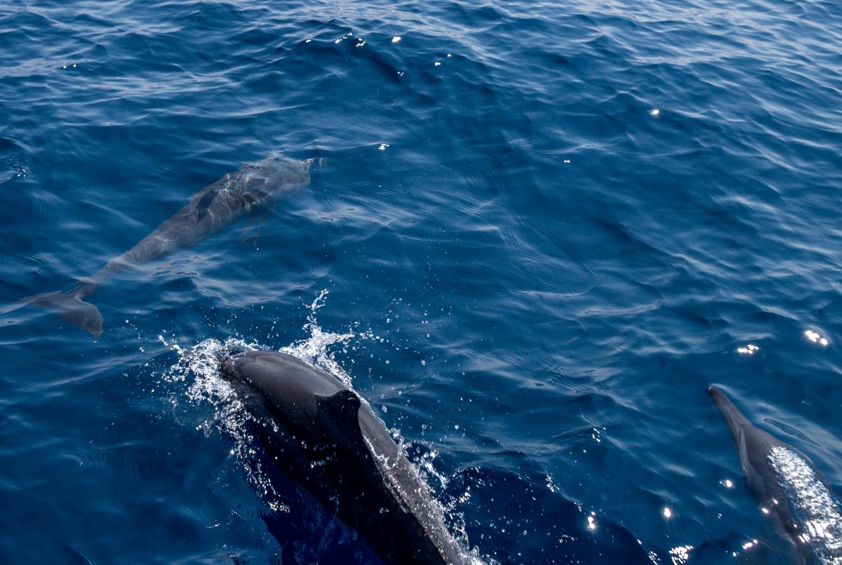 Delfines por doquier!