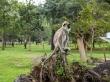 Monos en el parque