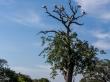 El árbol de los pelícanos, Parque de Yala