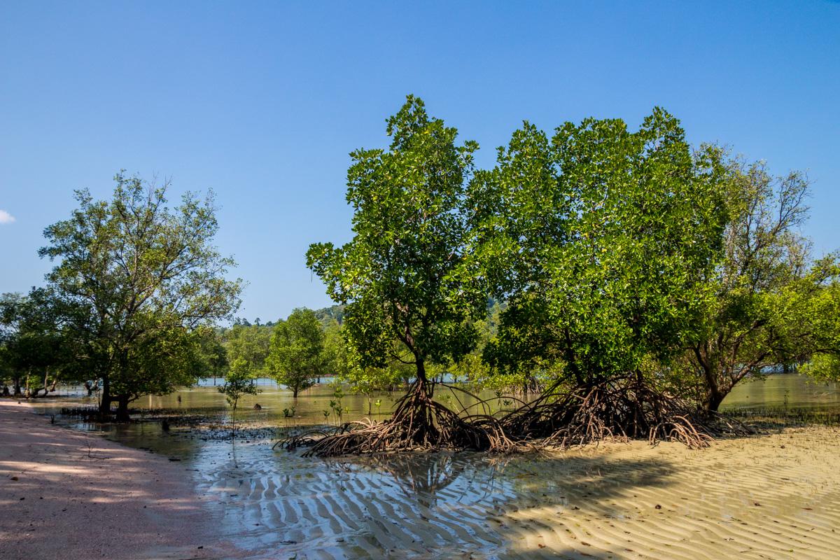 Manglares, Koh Phayam