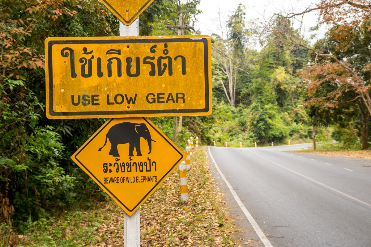 Los únicos elefantes que vimos fueron los de la señal, Khao Yai