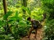 Caminando íntrépidos por la jungla