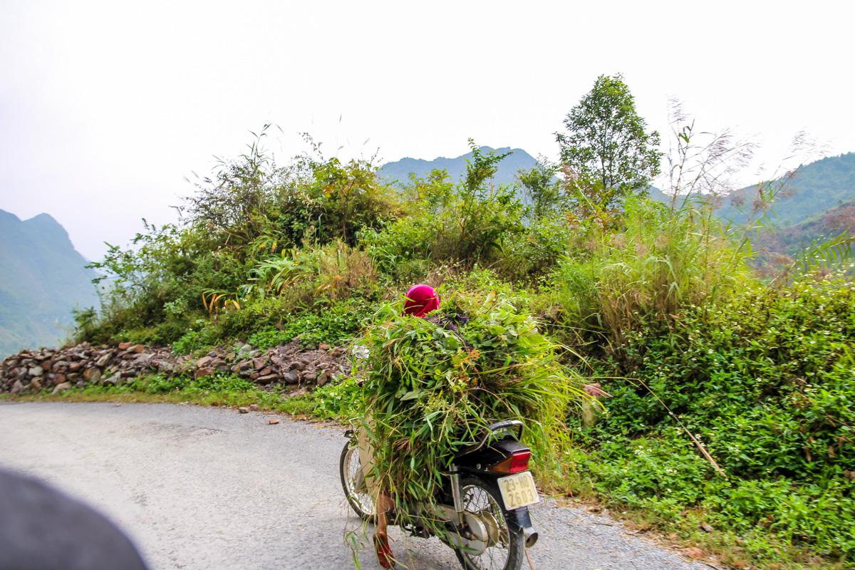 Arbusto sobre ruedas