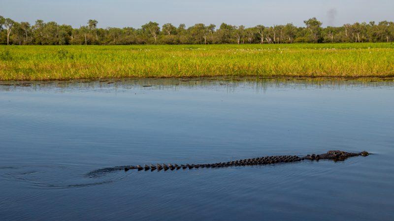 Darwin y los cocodrilos de Kakadu National Park